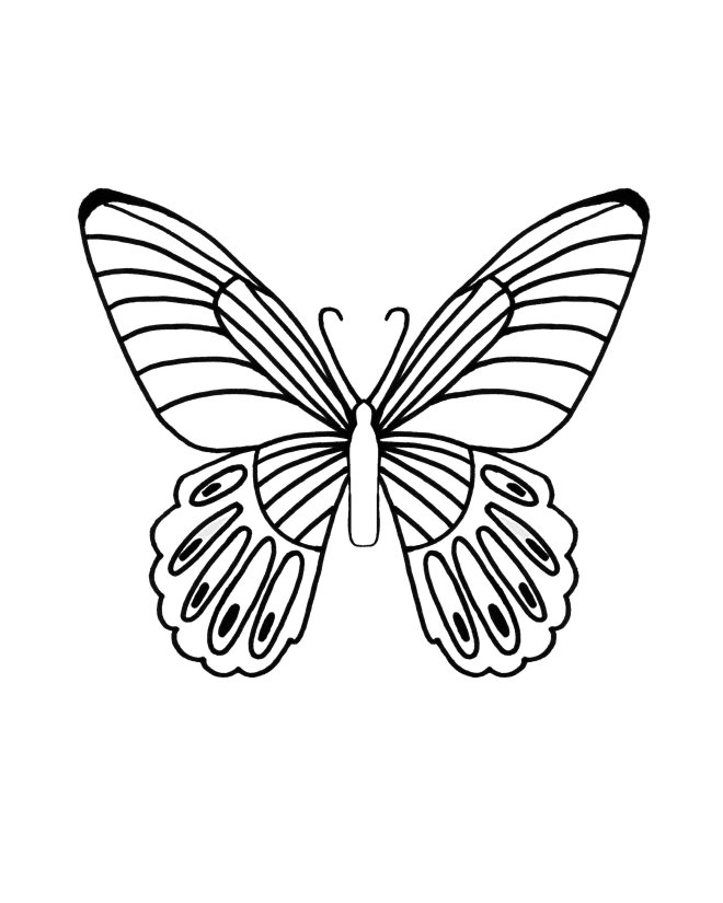 Butterfly Ink ONly